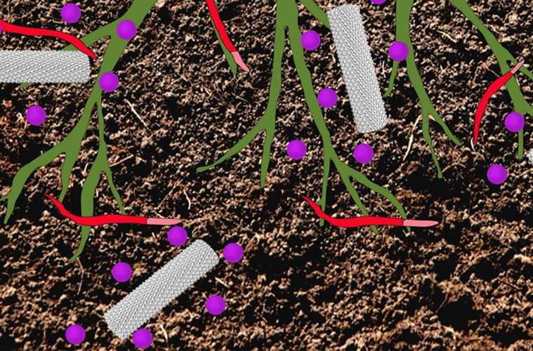 Drug-delivery method holds promise for controlling crop parasites