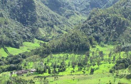 Ecologist proposes a new model to help meet global forest restoration goals
