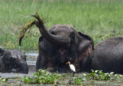 Elephants kill roughly 60 people every year in India's forested eastern state of Jharkhand
