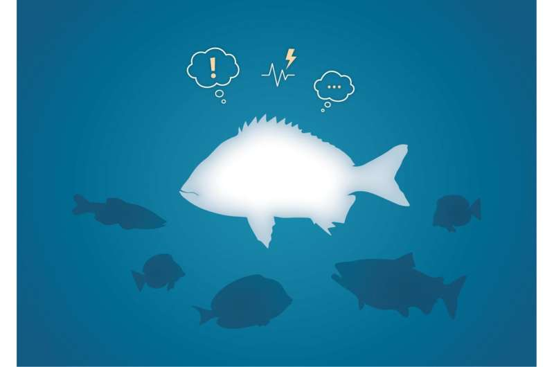 Emotional states discovered in fish