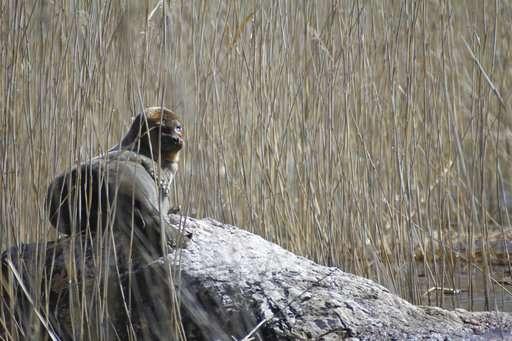 Endangered Finnish seals go online to highlight plight