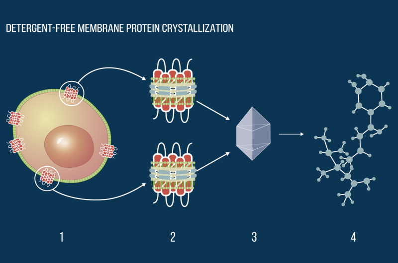 """End of """"soap"""" opera: Biophysicists propose new approach for membrane protein crystallization"""