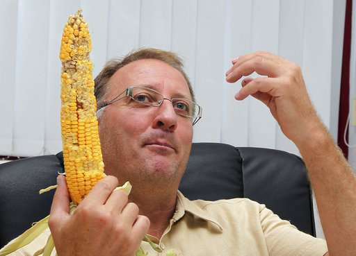 European court sides with Italian farmer pushing GM crops