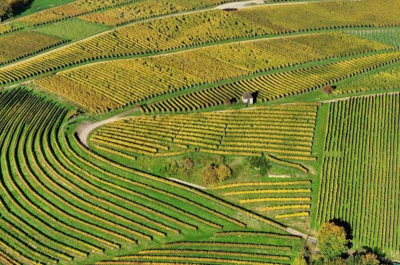 EU's future cyber-farms to utilise drones, robots and sensors