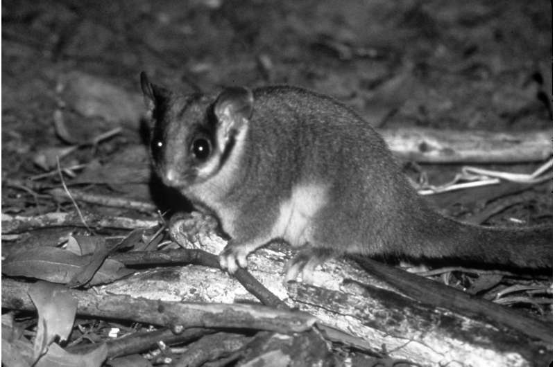 Expansion of Australian reserves for fairy possums might be at expense of other species