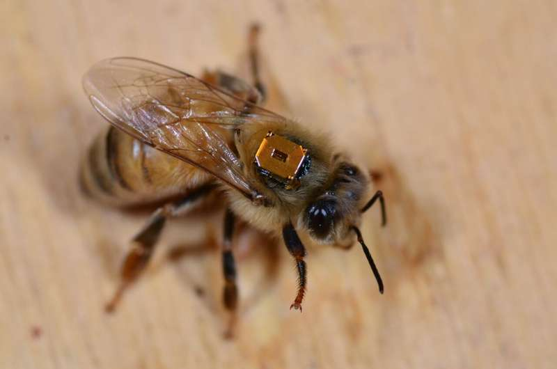 Exposure to neonics results in early death for honeybee workers and queens, York U study