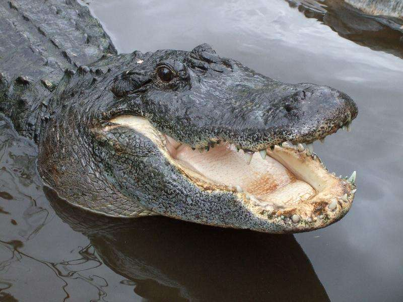 Extending the History of Crocs in California