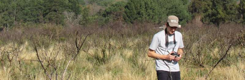 Felling pines: Doing it sooner rather than later is better for fynbos