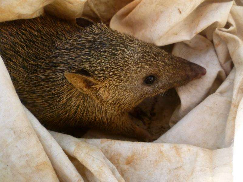 Feral cats and fires affecting wildlife on Top End island