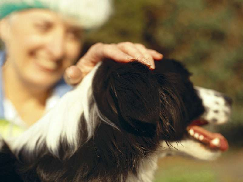 Fido or fluffy can bring you a big health boost
