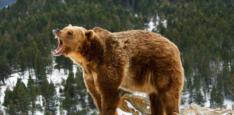 Fierce debate roars to life over grizzly bear hunt cancellation