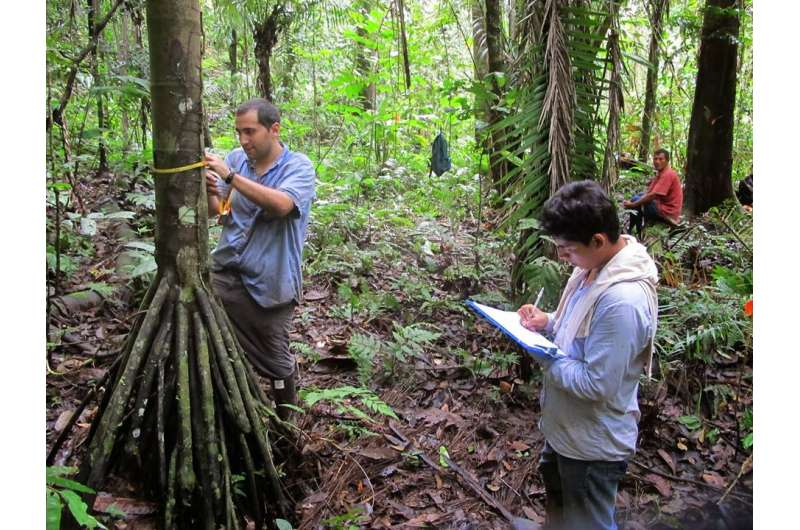 Financial incentives could conserve tropical forest diversity