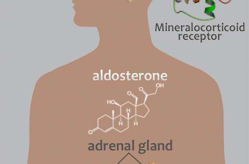 Findings link aldosterone with alcohol use disorder