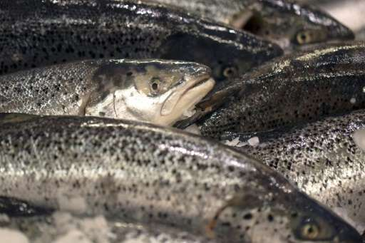 Finfish, such as salmon, make up only four percent of global seafood production