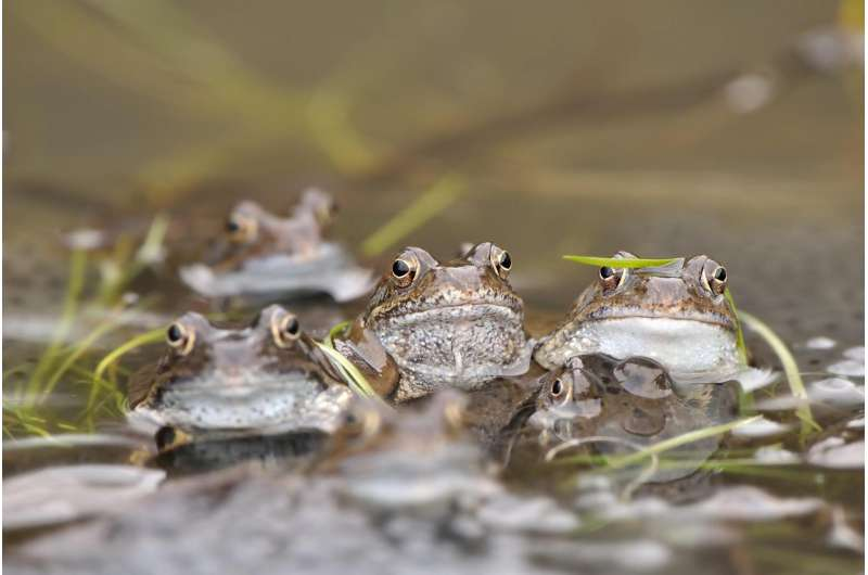 Fingerprint' technique spots frog populations at risk from pollution