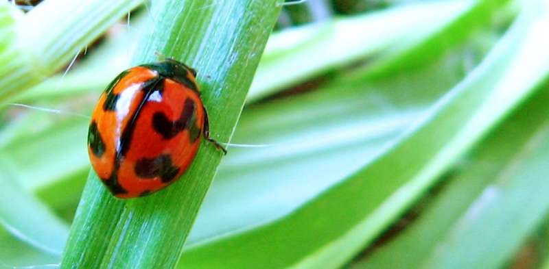 Five reasons not to spray the bugs in your garden