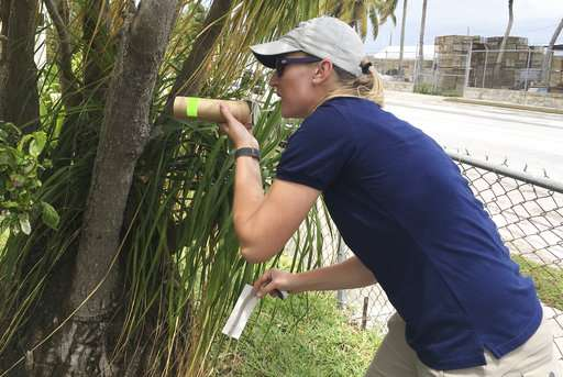 Florida tests bacteria-infected mosquitoes to kill off bugs