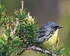 Fly-over states matter when understanding -- and saving -- migratory birds