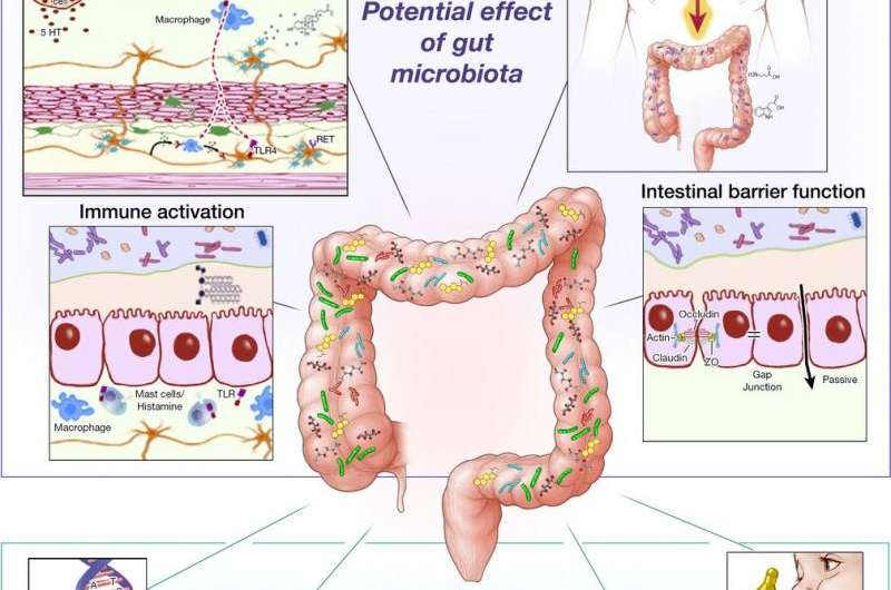 Food and antibiotics may change microorganisms in gut, causing IBS
