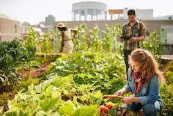 Food sharing as a means to reduce waste and boost urban sustainability