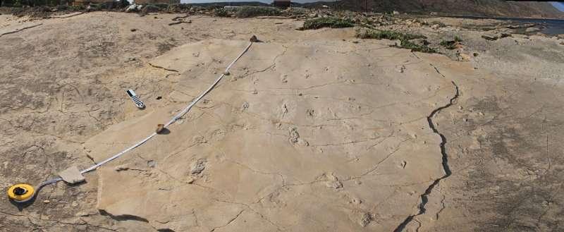 Fossil footprints challenge established theories of human evolution