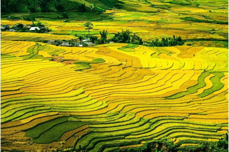 Fractal planting patterns yeild optimal harvests, without central control