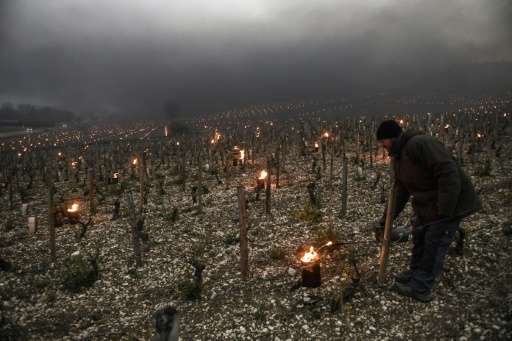 French wine growers are resorting to candles and heaters to limit the damage from unseasonal late spring frosts