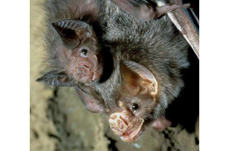 Friends help female vampire bats cope with loss