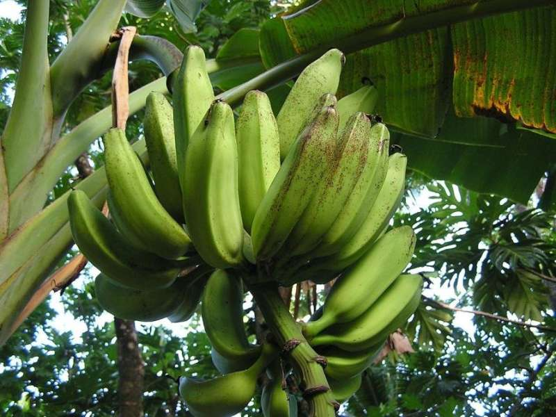 From racehorses to bananas—the importance of biosecurity