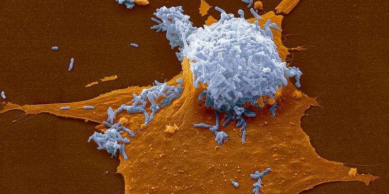 Gene transfer keeps bacteria fit