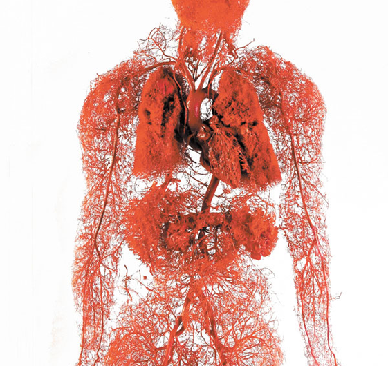 Giving blood to artificial organs