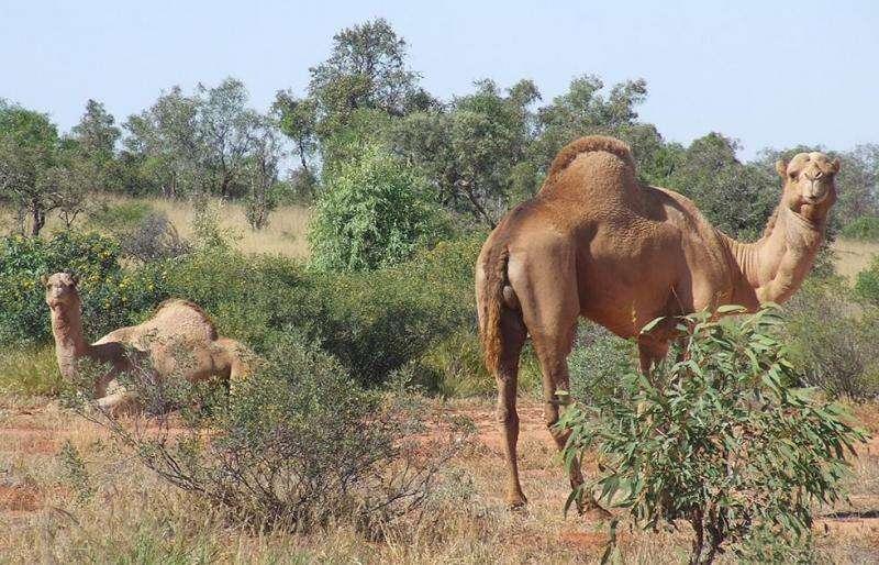 Global megafauna study calls for conservation rethink