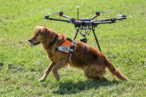 Golden retriever Capo sits next to a drone. Together they provide 'an eye in the air and a nose on the ground' for Swiss search