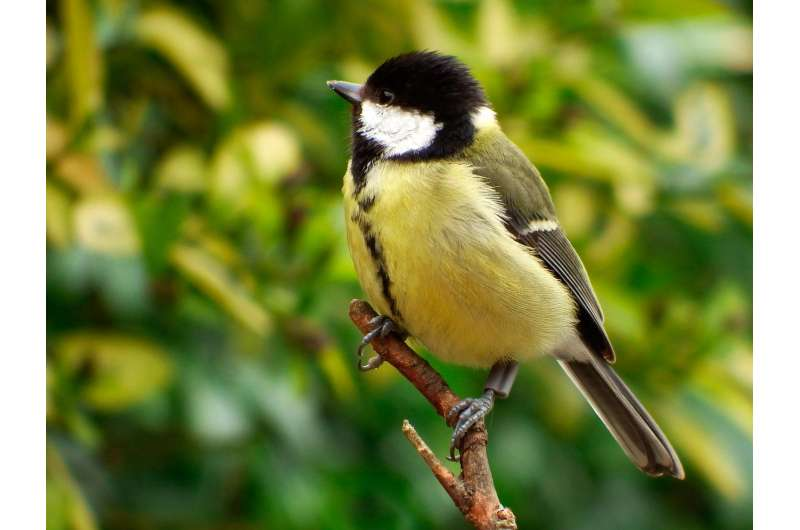 Good grief! Losing a friend brings wild birds closer together