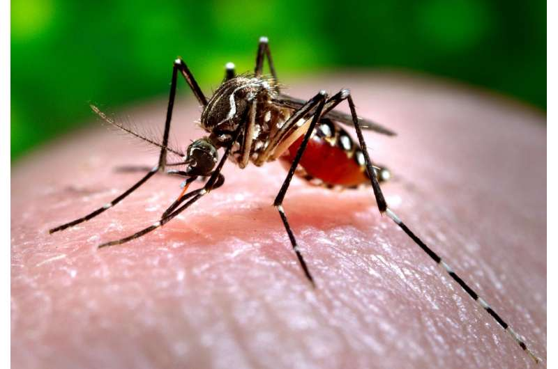 Google searches can be used to track dengue in underdeveloped countries
