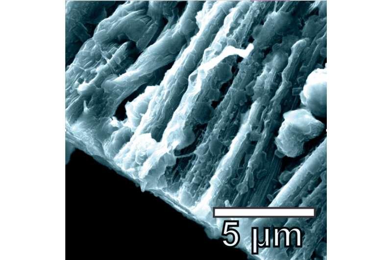 Graphene-nanotube hybrid boosts lithium metal batteries