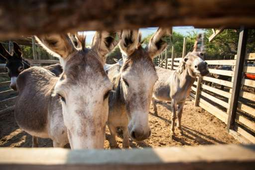 Gumtree has banned advertisements offering donkeys for sale in South Africa