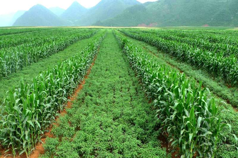 Helping Chinese farmers tackle erosion, increase profits