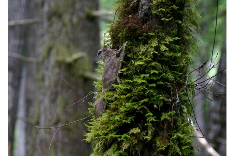 Hiding in plain sight: New species of flying squirrel discovered