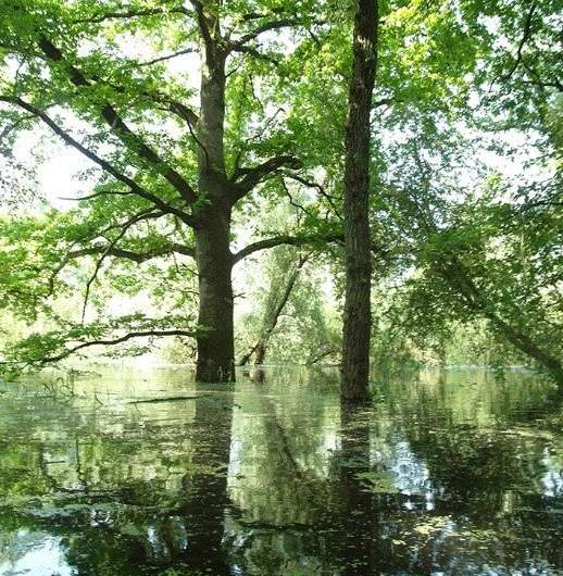 Higher biodiversity due to river-expanding measures