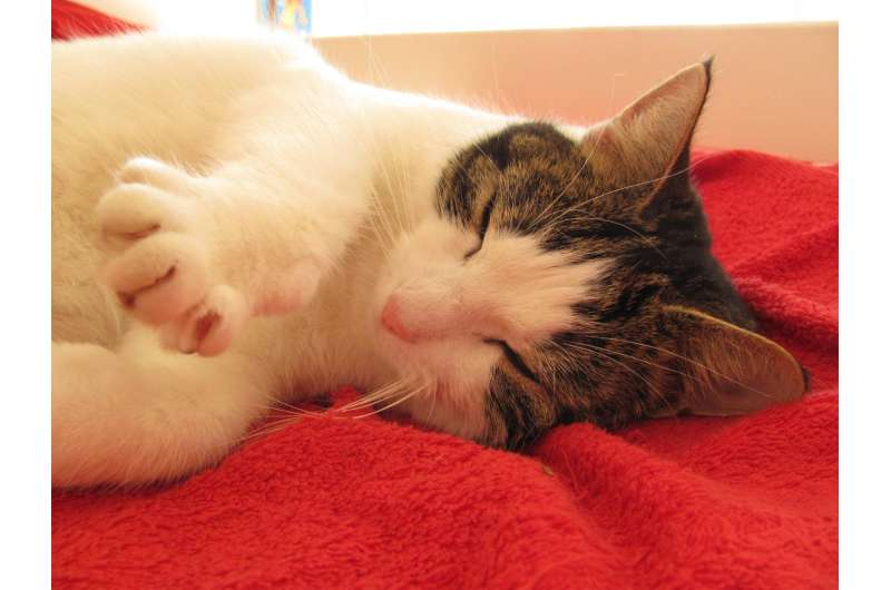 High levels of chemicals found in indoor cats