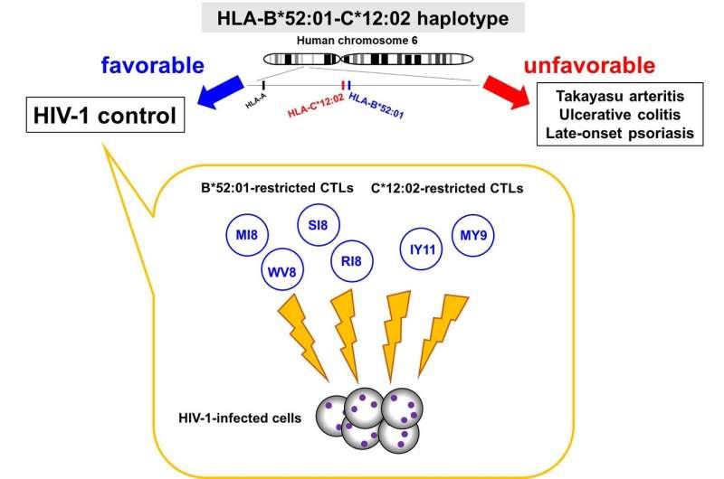 HIV-1 regulation via protective human leukocyte antigen (HLA) haplotypes