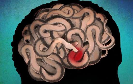 How estrogen modulates fear learning—molecular insight into PTSD