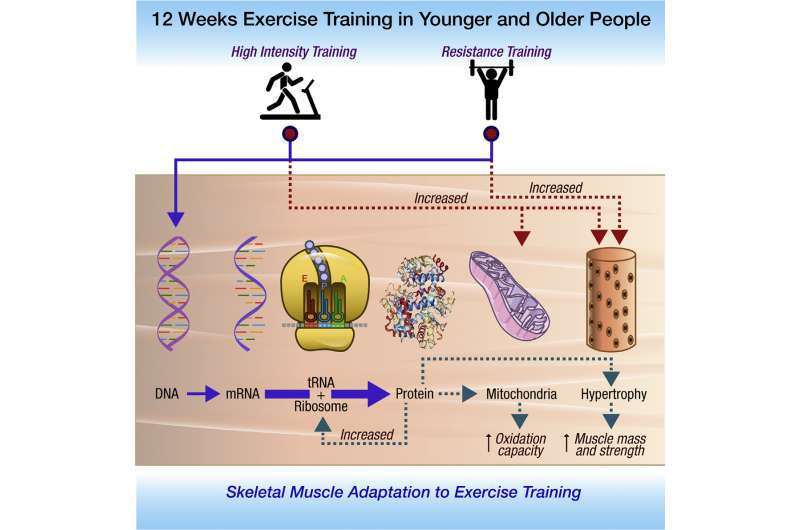 How exercise -- interval training in particular -- helps your mitochondria stave off old age