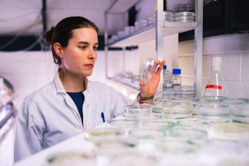 How green algae assemble their enzymes