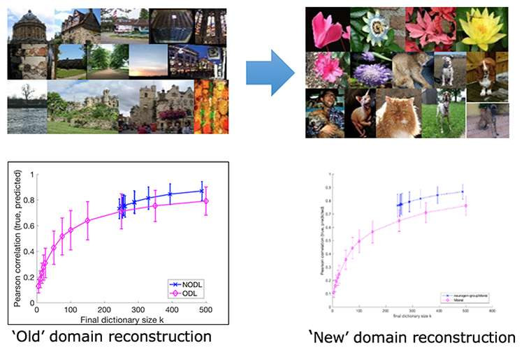 How Neuroscience Helps to Advance Machine Learning