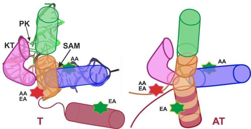 How switches work in bacteria