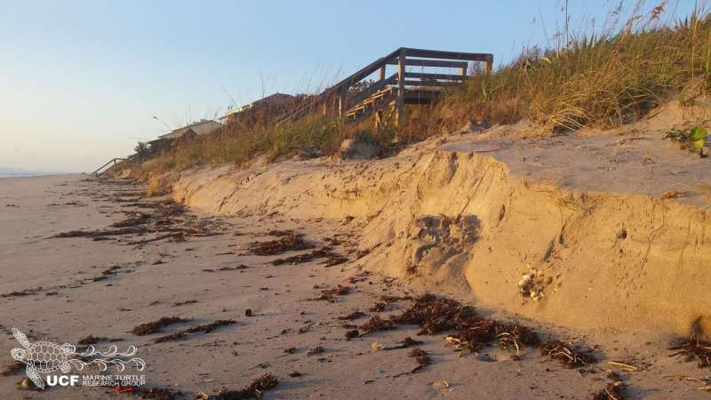 Hurricane exposes and washes away thousands of sea turtle nests