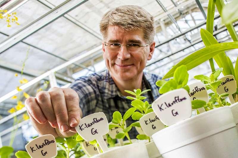 Planta de hielo para ayudar a combatir los efectos del calentamiento global en los cultivos bioenergéticos