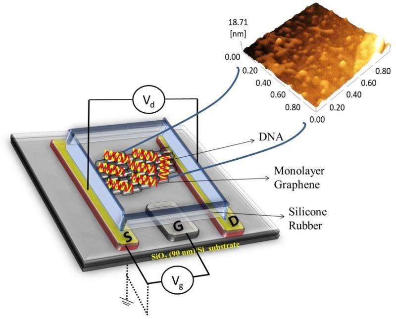 Improving DNA-detecting transistors